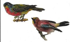 Victorian Die Cut Scrap 2 Beautiful Exotic Birds  ca. 1880s in Collectibles, Paper, Ephemera, 1800-99 | eBay