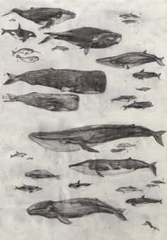 Some of these whale and dolphin sketches could make nice tattoos