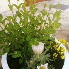 #wiosna #rośliny #spring #ogród #garden #bashotel Plants