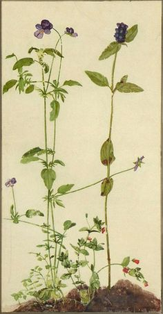 """formerly attributed to Albrecht Dürer """"Three Medicinal Herbs: Pansy, Brunella, Anagallis"""" (16th century) Watercolor and gouache on vellum"""