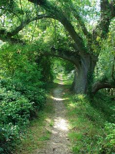 https://flic.kr/p/nnNgu | Tree path, Arundel, Sussex, England by Dean Russell