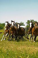 Индийские лошади в битве при Литтл-Бигхорн реконструкции на Ворона индейской резервации в Монтане | Аллен Расселл фотографии