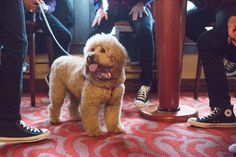 I mean, their dog Alf wore a bow tie — can you GET any cuter?!