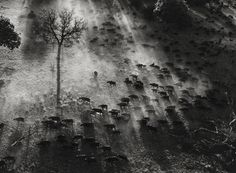 Okavange Delta, Botswana, Africa  photo by Sebastião Salgado, 2007    This is the most amazing sight, we took at flight over the Delta and it looked just like this!