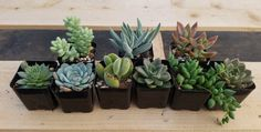 "Facebook Special STARTER Boxes of Exact 9 Assorted succulents in their 2"" plastic containers assembled by the Boyz FREE SHIPPING"