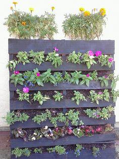 Another gorgeous pallet garden! A great, environmentally-conscious solution to a boring small space!