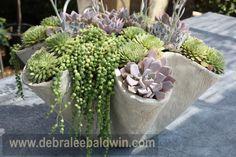 senecio rowleyanus (string of pearls) and echeverias Balcony Garden, Garden Pots, String Of Pearls, Fungi, Container Gardening, Planter Pots, Nature, Ideas, Home