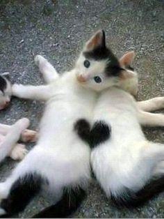 key cats!!! longlegslenore
