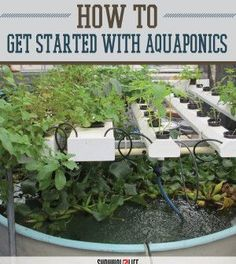 How Aquaponics Works | Gardening and Raising Fish For Survival Ideas and Tips by Survival Life http://survivallife.com/2015/06/23/intro-to-aquaponics/