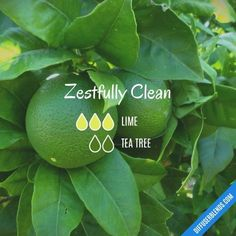 Zestfully Clean - Essential Oil Diffuser Blend