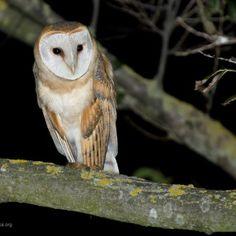Una poesia di Quasimodo dedicata alla notte, al cuore, agli uccelli notturni, agli alberi, ai nidi