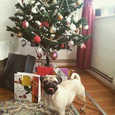 Christmasy Emma