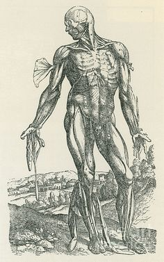 vintage medical illustration // office // Vesalius De Humani Corporis Fabrica Poster