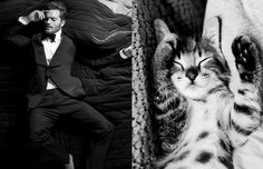 boysandcats