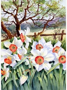 Ann Mortimer › Portfolio › Narcissi in a field Watercolor Landscape, Watercolor Flowers, Landscape Paintings, Watercolor Paintings, Watercolor Artists, Art Floral, Image Halloween, Image Nature, Sunflower Wallpaper