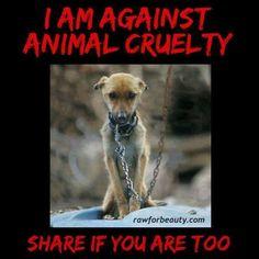 Ik ben tegen dieren mishandeling .