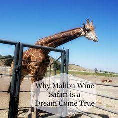Why Malibu Wine Safari is a Dream Come True