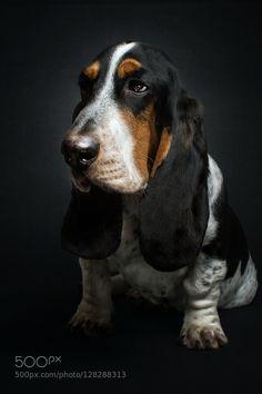 monday sucks by Christian Vieler - Photo 128288313 - Basset Puppies, Bloodhound Dogs, Hound Puppies, Basset Hound Puppy, Beagle Puppy, Cute Dogs And Puppies, Pet Dogs, Doggies, Cat Vs Dog