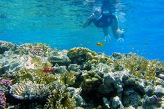 Snorkeling in Sharm El Sheikh - El Faraana Bay- Ras Kathy