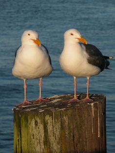Seagulls sunning themselves