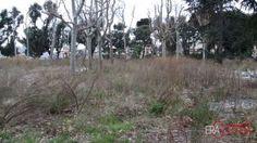 L'Acquasola è stato il primo giardino pubblico di Genova ma anche uno dei primi in Italia: la prima spianata è stata eretta tra il 1320 e il 1347    [photo credit: Daniele Orlandi]