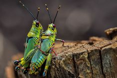 Love you ! Les Continents, Animals, Insects, Africans, Animales, Animaux, Animal, Animais