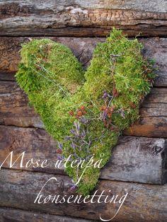 How to make a moss covered heart. Christmas Hearts, Christmas Diy, Heart Decorations, Christmas Decorations, Moss Wreath, Moss Art, Heart Diy, Moss Garden, Heart Wreath