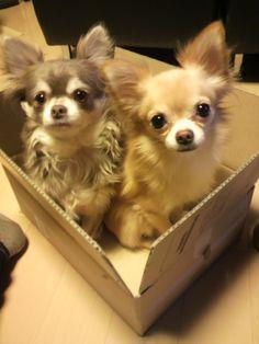 Cute duo