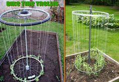 15 Inspiring DIY Trellis Ideas For Growing Climbing Plants 15 Inspiring DIY Garden Trellis Plans,Des Diy Trellis, Garden Trellis, Trellis Ideas, Bean Trellis, Bamboo Trellis, Organic Gardening, Gardening Tips, Gardening Courses, Container Gardening