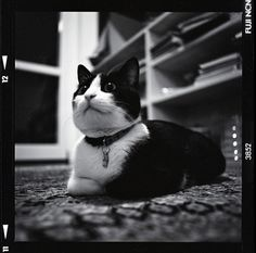 Cats and Dogs in Monochrome - Lomography