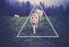 #triangl