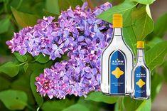 Handmade Cosmetics, Fiji Water Bottle, Edible Flowers, Flower Tattoos, Aloe Vera, Flower Pots, Most Beautiful Pictures, Vodka, Flower Arrangements