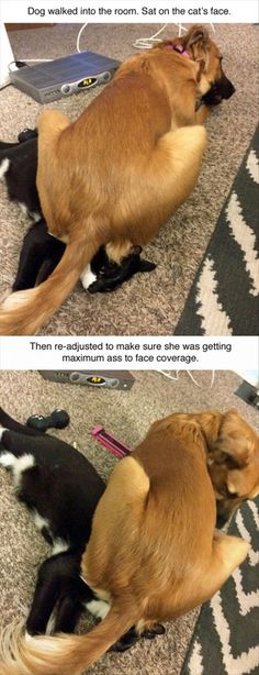 37 Funny Pictures for Today