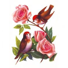 Vintage birds, aviaries and eggs :-) Enjoy! Flower Wallpaper, Wallpaper Backgrounds, Fabric Painting, Painting & Drawing, Decoupage Glass, Bird Pictures, Bird Prints, Bird Art, Vintage Flowers