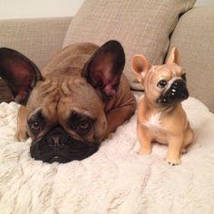 """I'm so cute they made a statue of me....now I'm bored"", precocious French Bulldog Puppy."