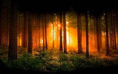 Click the Pic! Magic in this Photo. i like this Mornings in the Forest when the Fog reflecting the Sunlight! Walking in a Magic Forest . is like a Dream walk. Enjoy it my Friends Beautiful World, Beautiful Places, Beautiful Pictures, Giant Tree, Magic Forest, Deep Forest, Country Landscaping, Sunset Photos, Photo Wallpaper