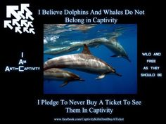 Freedom for Whales and Dolphins