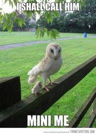 Mini owl...