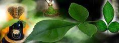 MAHESH KHAJANCHI: रुद्राभिषेक  में उनके रौद्र रूप की ही स्तुति की जा...