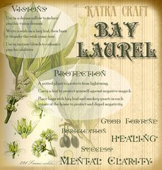Bay leaves are a great herb for spell crafting. They are safe to burn or cook with & are good for a multitude of workings.