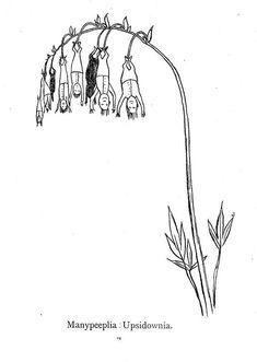 Edward Lear Nonsense Botany 1