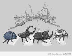 beetles on abbey road!! keke