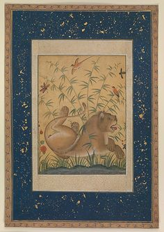 Lion at Rest. Painted by Mansur during the reign of Akbar (1556-1605) in Mughal India. Intended for or related to a muraqqa, an Islamic album of small paintings and calligraphies often presented as a gift during a milestone.