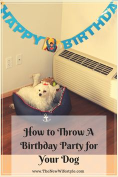 How to Throw A Birthday Party for a Dog-hilarious!