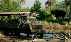 Disney Animal Kingdom. Witness the exotic animals of Africa up close as they traverse the savanna as you ride in a rugged open-sided safari vehicle. No two safaris are the same as giraffes, lions, antelope, rhinos, warthogs, zebras and other stunning species roam the land.