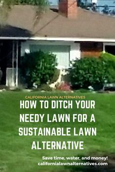 How to get rid of a wasteful traditional lawn and save big on water and maintenance with a lawn alternative. Lawn Alternative, Drought Tolerant, How To Get Rid, Yard Landscaping, Nevada, Landscape Design, Sustainability, Grass, Arizona