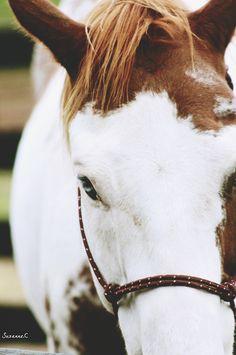 Horse. <3 by TheBellJar.nl
