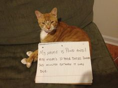 Cat shaming...I love how they look like they could care less...the dogs really do look ashamed!