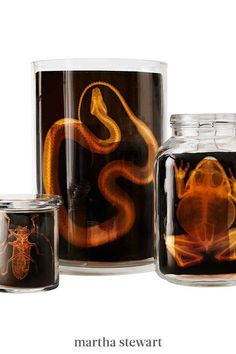 Kids will love these spooky animal skeletons. Anatomy cards are slipped into apothecary jars for a kid-friendly Halloween craft. #marthastewart #crafts #diyideas #easycrafts #tutorials #hobby Halloween Potions, Spooky Halloween, Halloween Costumes For Kids, Diy Halloween Apothecary Jars, Halloween 2019, Scary Halloween Decorations, Diy Halloween Decorations, Fairy Lights In A Jar, Martha Stewart Halloween