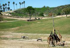 Safari Park - San Diego